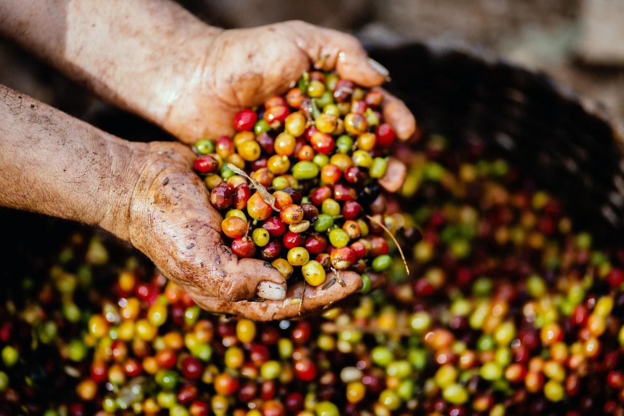 Kaffeeverarbeitung